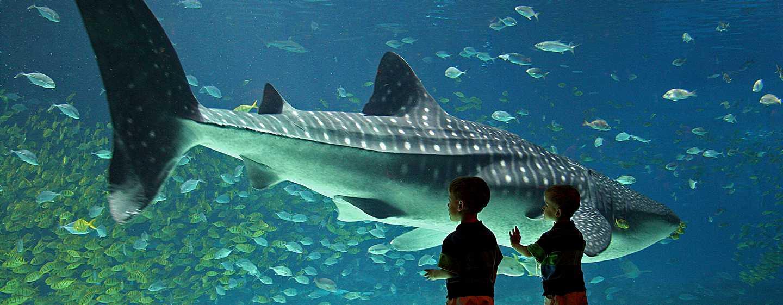Hilton Atlanta Airport Hotel – Georgia Aquarium