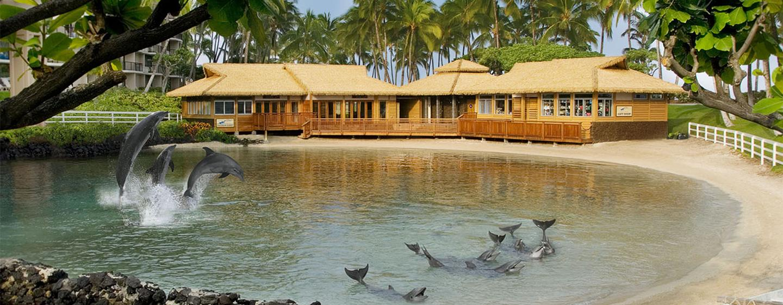 Hilton Waikoloa Village - Delfinerlebnis